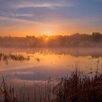 Летним утром на озере в тёплых лучах солнца. :: Pavel Vasilev