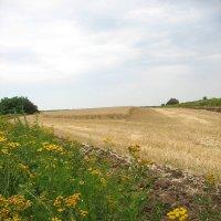 Пшеничное поле :: Novikov38 Новиков