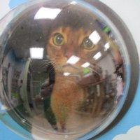 Кошка в скафандре. :: Зинаида