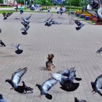 пес-разбойник :: Владимир