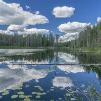 Лесное озеро :: Владимир Филимонов