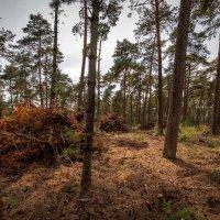 Дела лесные :: Николай Гирш