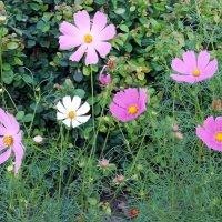 Городские цветы :: Galina Solovova