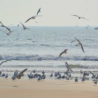 Птицы :: Юрий Гилёв