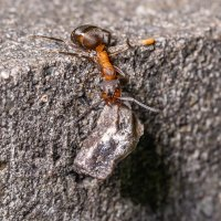 Зачем муравьям камни ? :: Денис Антонов