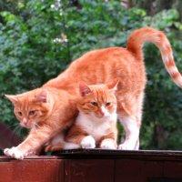 Солнечные коты :: Андрей Снегерёв