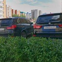 Cуперфекундация. :: Виталий Бобров