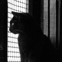 Одиночество - СУКА! :: M Marikfoto