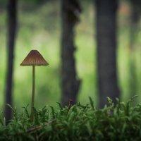 Один в большом лесу :: Алексей (GraAl)