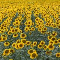 Желтый строй :: M Marikfoto