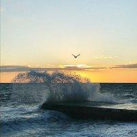 Море, чайки... :: Татьяна Тюменка