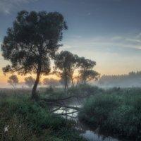 Утро августа ... :: Roman Lunin