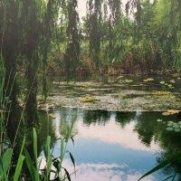 Старый пруд :: Novikov38 Новиков