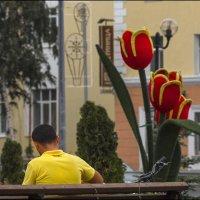 Желтый-красный :: Александр Тарноградский