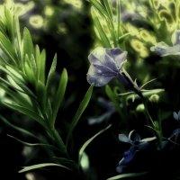 Симфония утренней травы :: Александр Белый
