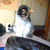 Это не из нашего аквариума!! :: Milocs Морозова Людмила