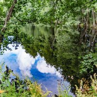прогулки по лесу :: Дмитрий Лупандин