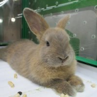 Кролик,3 месяца. :: Зинаида
