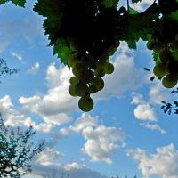 гроздь перед грозой :: Люша