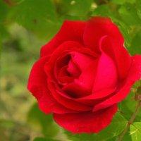 Ещё цветут.. :: Юрий
