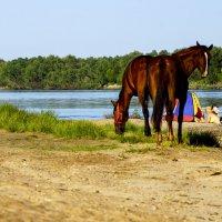 Лошади на пляже :: Сергей Царёв