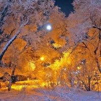 Луна заснула в ветках седого тополя :: Екатерина Торганская