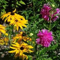 городские цветы :: Sabina