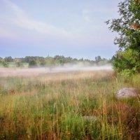 Туман за околицей :: Юлия Новикова