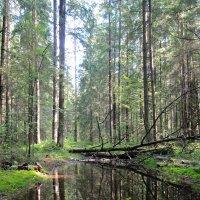 Лесные красоты :: Виктория Писаренко