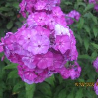 Цветы :: Maikl Smit