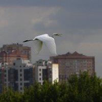 Белая над городом. :: Алекс Ант