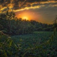Вечер на озере лотосов :: Геннадий Клевцов