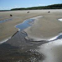Дикий пляж :: Anna Ivanova