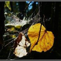 Экибана  Осени :: олег свирский