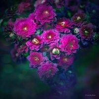 Цветы :: Дарья А