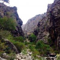 Гулькамское ущелье :: Светлана Баталий