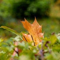 Вот и осень... :: Александр Леонов