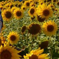 Цветок солнца :: Savayr
