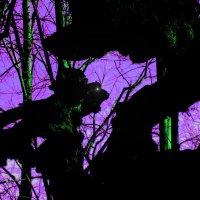 Духи леса. :: игорь кио