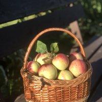 Урожайная осень :: Надежда Шубина