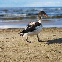 Пляжный сезон продолжается :: Инга Энгель
