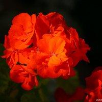 Цветы на солнце :: Дмитрий Svensson