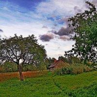 Сельские  мотивы... :: Vladimir Semenchukov