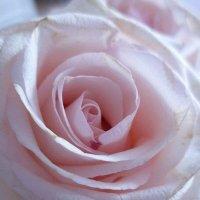 Королева цветов :: Yulia Raspopova