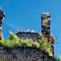 в руинах крепости Орешек :: Елена