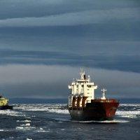 Август в Арктике. :: игорь кио