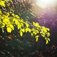 Осеннего солнца лучи :: Alm Lana