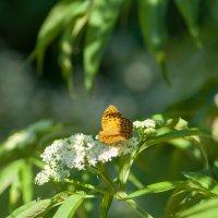 Бабочка в своей естественной среде :: Таня Горбачева