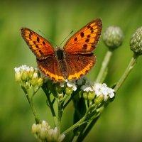 и опять про бабочек...15 :: Александр Прокудин