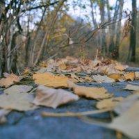 Падают листья :: Yulia Raspopova